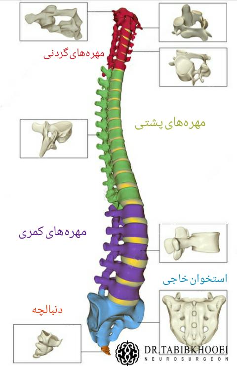 ساختار ستون فقرات